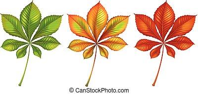 couleur, différent, ensemble, feuilles