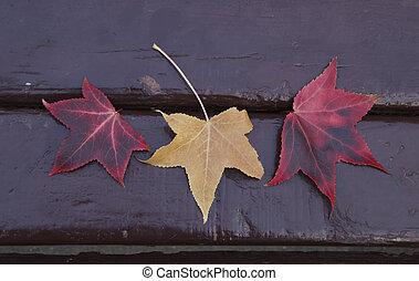 couleur, differents, texture., banc, mensonge, parc, feuilles érable, automne, parc