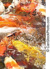 couleur, eau, résumé, fond, goldfishes