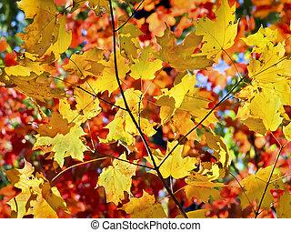 couleur, en flammes, feuilles, automne