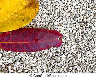 couleur, feuilles, automne