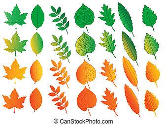 couleur, feuilles, vecteur, ensemble, illustration