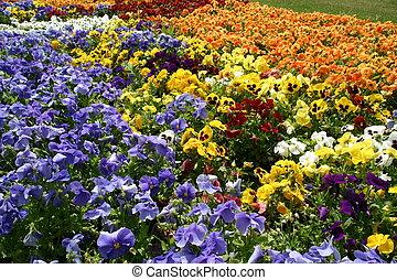 couleur, fleurs