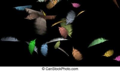 couleur, flotter, plume