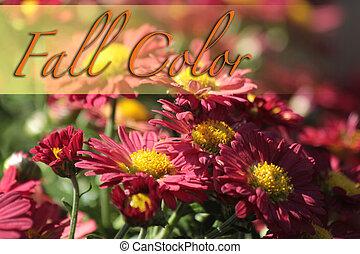 couleur, joli, automne