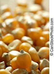 couleur, macro, maïs, graines, séché, orange