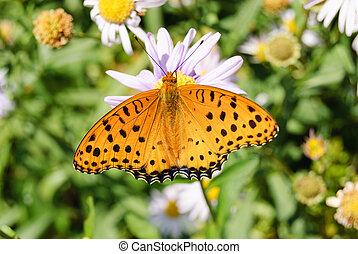 couleur orange, papillon