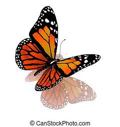 couleur orange, papillon, isolé