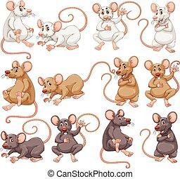 couleur, souris, différent, fourrure