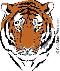 couleur tigre, tête, interprétation, 6