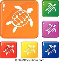 couleur tortue, ensemble, vecteur, icônes