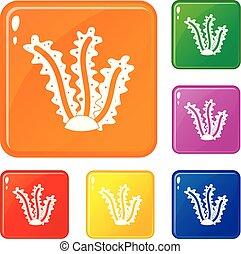 couleur, vecteur, ensemble, algue, icônes