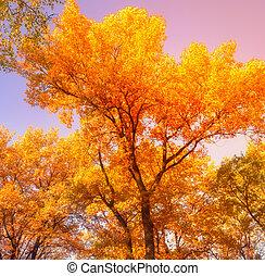 couleur, vendange, feuilles, arbres, automne