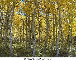 couleurs, automne, sierras, oriental