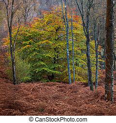 couleurs, bois, perthshire