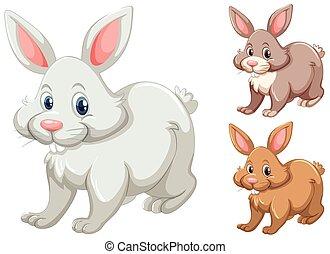 couleurs, différent, lapins, trois