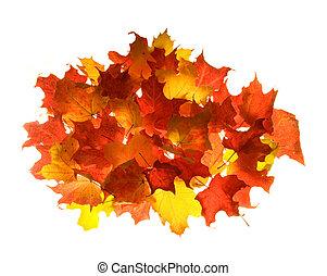couleurs, feuille, ardent, érable, automne