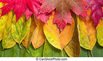 couleurs, fond, automne