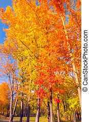couleurs, forêt, chutes