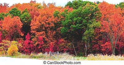 couleurs, froussard, automne
