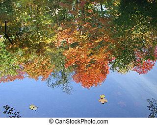 couleurs, reflet, automne