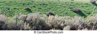 counterlight, vista, de, um, colina verde, coberto, com, capim, e, arbustos