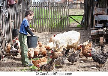 Country boy feeding the animals - Little farm boy feeding...
