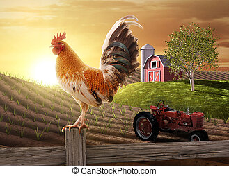 Country Farm Morning - Rooster perched upon a farm fence ...
