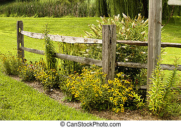 Country Fence - Country split rail fence with black-eyed...