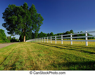 Country Fence - A White Horse Paddock Fence In The...