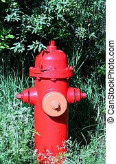 fire hydrant in the grass