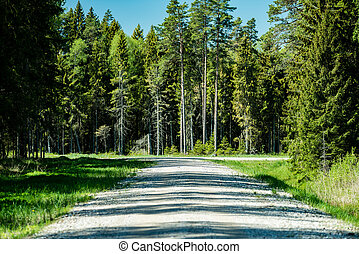 country gravel road in the forest