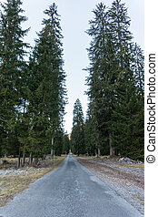 country gravel road leading through tall trees in a coniferous forest in the mountains