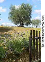 Country landscape in Maremma (Tuscany, Italy) at summer