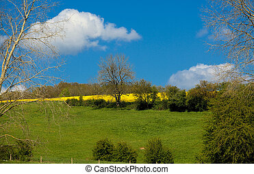 country landscape in spring