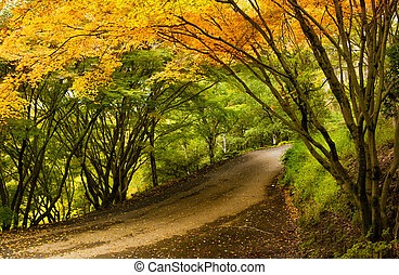 Country Lane - A Beautiful Peaceful Autumn Scene