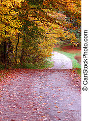 Country Lane - A country road dips and winds it way around the golden leafed trees in autumn.