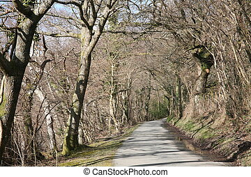 A secluded country lane. In North Wales.