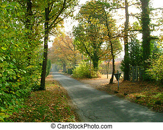 Country lane in Autumn