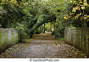 A country lane leading into the distance with fall leaves and color and trees on either side of the pathway