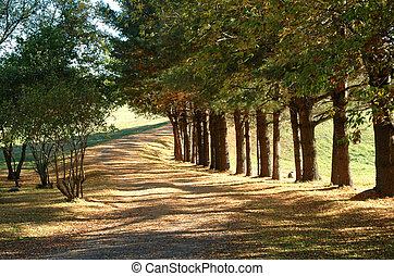 Country Lane in Fall
