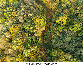 Country lane on autumn forest aerial view