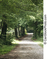 view down a country lane on a summer day with leafy tree canopies