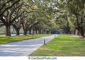 Country lane with ancient oak trees draped in spanish moss