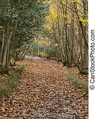 Country lane with autumn leaves on ground