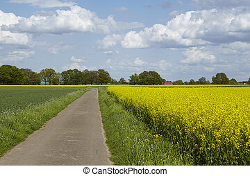 Country lane with trees and a blossoming, yellow colza field