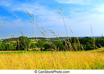 Country meadow landscape - Scenic view on summer...