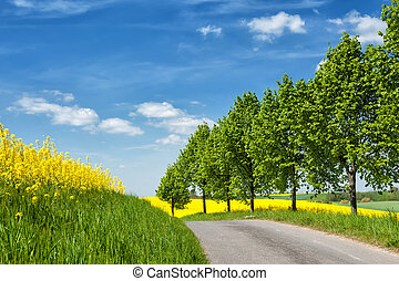 Country road along blooming rape fields in Western Pomerania, Germany, in spring