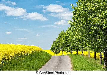 Country road along blooming rape fields in Western...