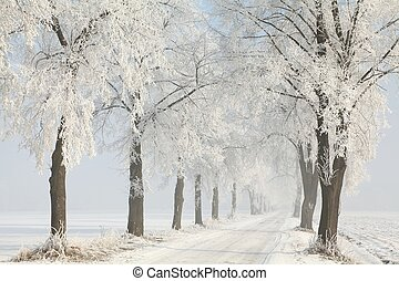 Country road among frosted trees - Winter rural road among...